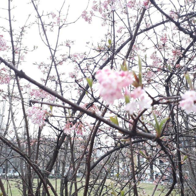 Spring is in the air frhlingnaht springvibes spring frhling instaflowerhellip