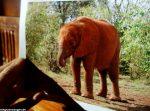 Bild von meinem Patenkind vom reaev, Elefant Malima